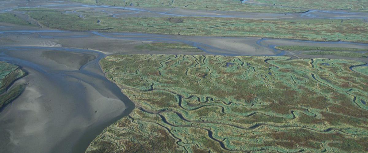 Het Verdronken Land van Saeftinghe | © Misjel Decleer