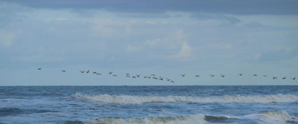 Noordzeevogels | CC BY-SA 3.0 4028mdk09, Wikimedia Commons