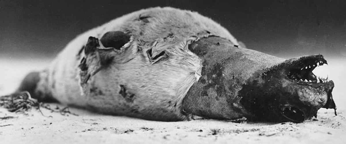 Zeehondenlijk | © Ecomare