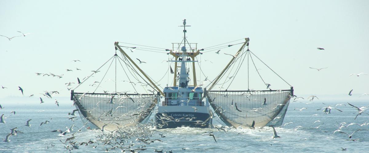 shrimp fishing | © Ecomare, foto fitis, sytske dijksen