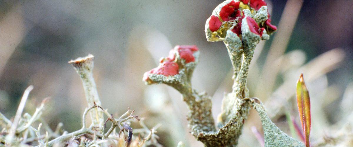 Rood bekermos | © Foto Fitis, Sytske Dijksen