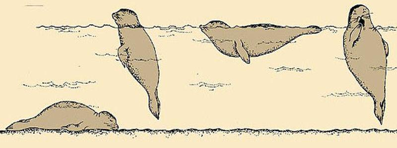 Slapende zeehonden   © Ecomare, Sytske Dijksen