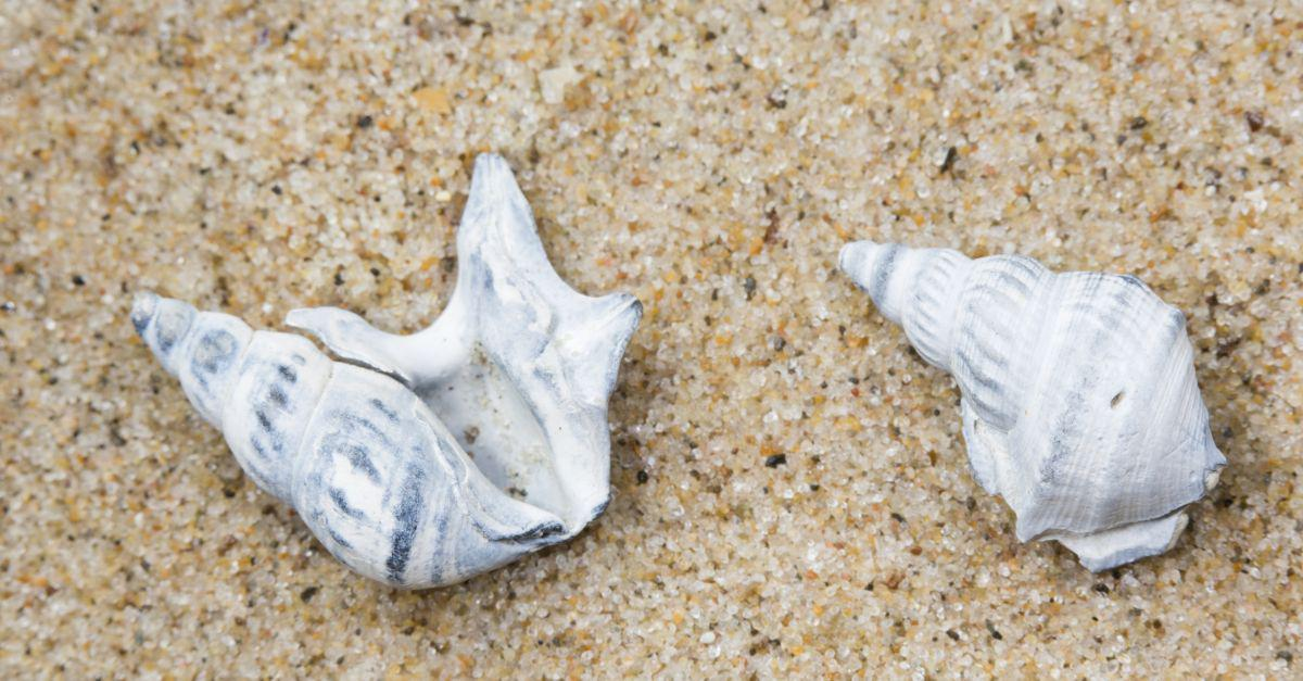 Fossiele pelikaansvoet   © Misjel Decleer