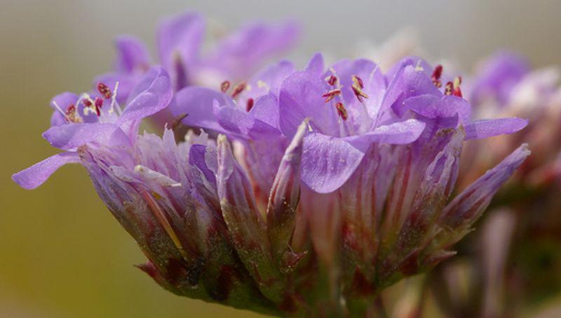 Detailfoto van de bloemen   © Foto Fitis, Sytske Dijksen