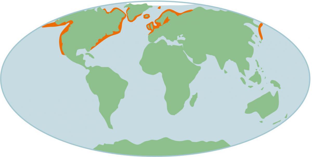 Verspreiding gewone zeehond op wereldschaal | © Ecomare, Sherri Huwer