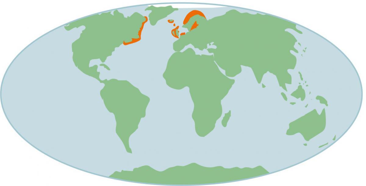 Verspreiding van de grijze zeehond | © Ecomare