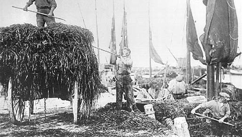 Wiervangst in de haven van den Oever | © Historische Vereniging Wieringen