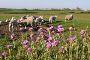 Engels gras | © Foto Fitis, Sytske Dijksen