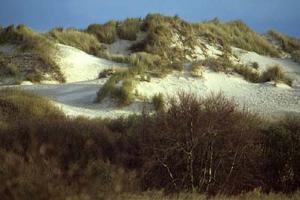 Duinen op Schiermonnikoog   © Ecomare